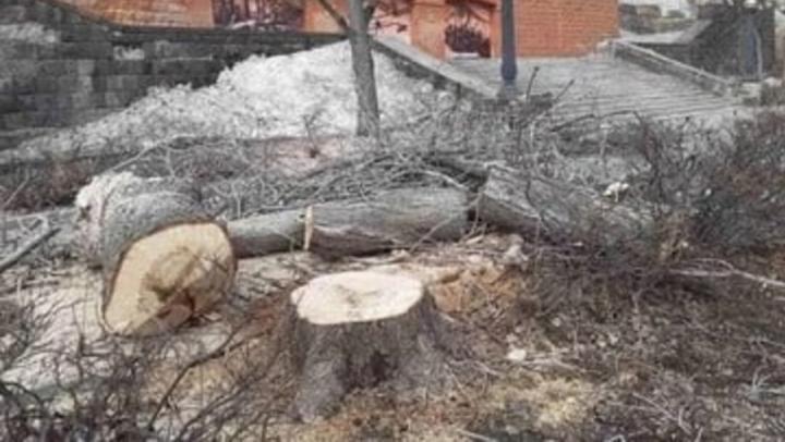 Саратовцы жалуются на вырубку деревьев на набережной и обман чиновников