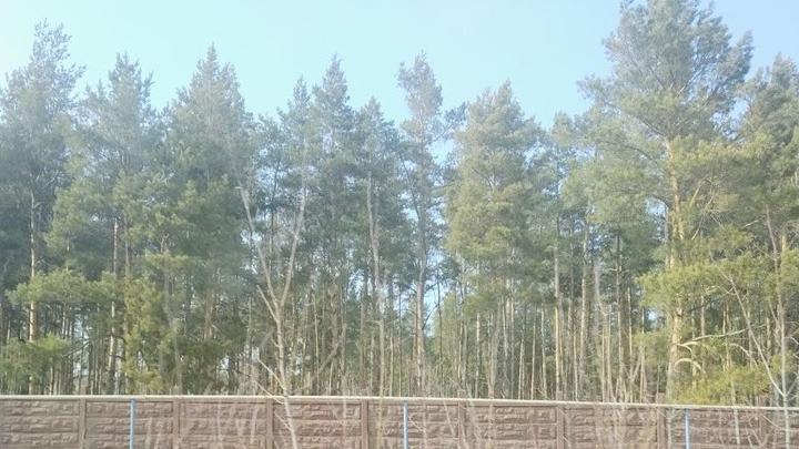 Аркадакский лесхоз нарушал противопожарное законодательство