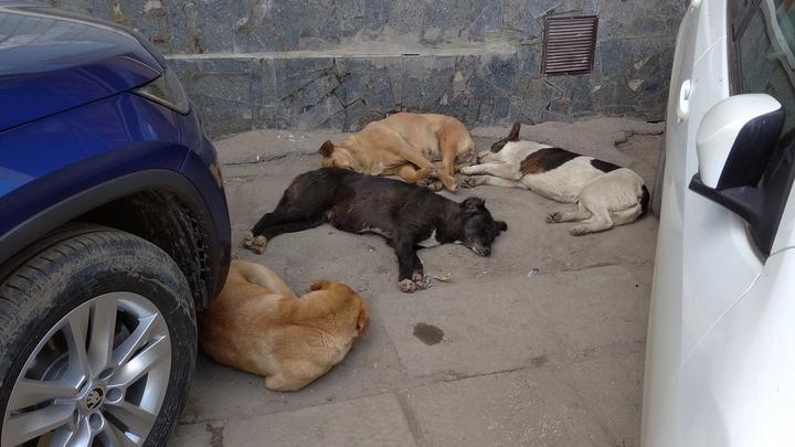 Бешеные животные в прошлом году искусали 247 саратовцев