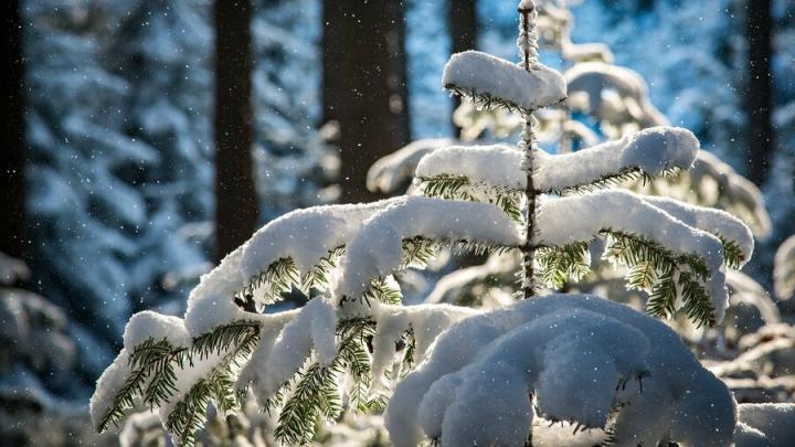 Дождь и снегопад в Саратове закончатся
