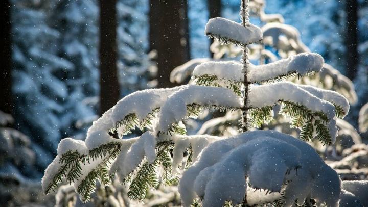 Южный ветер принес в Саратов тепло: в городе до +17 градусов
