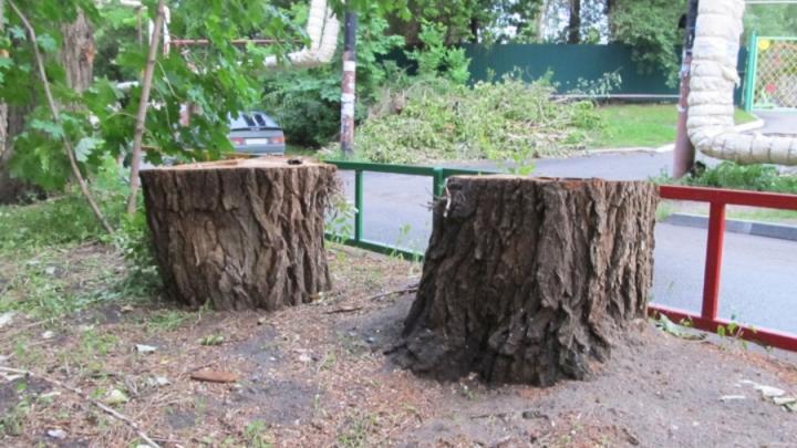 Саратовскую администрацию решили не наказывать из-за незаконного спила деревьев