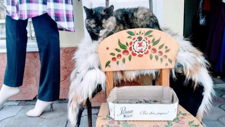 Саратовская кошка во сне зарабатывает себе на корм
