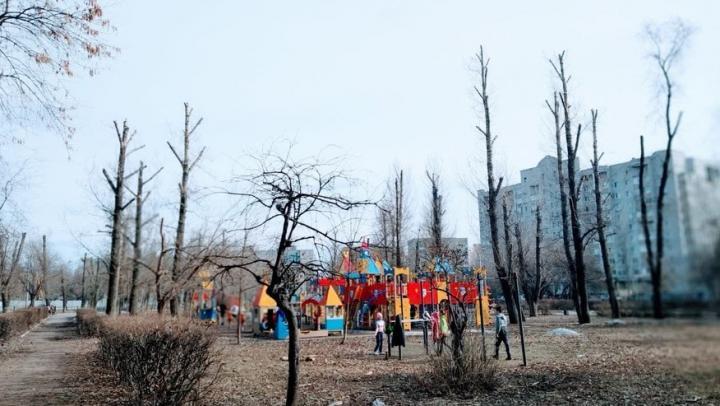 Еще один сквер варварски «подстригли» в Заводском районе