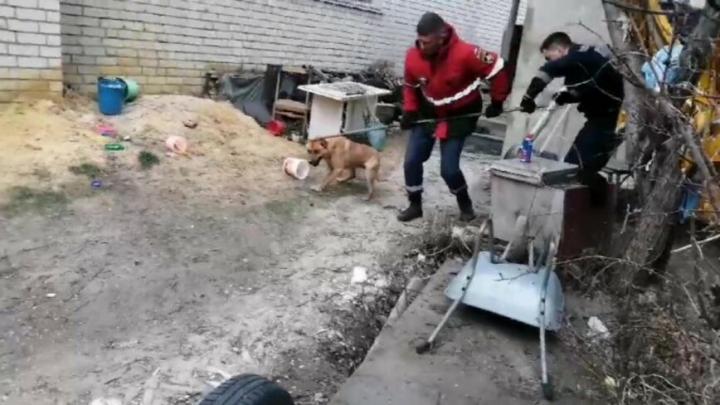 Саратовские спасатели достали собаку из погреба