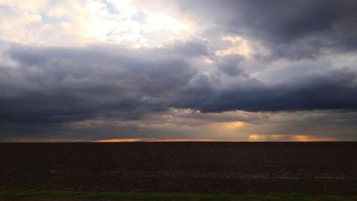 Непогода не дает саратовским туристам добраться до тюльпанных полей