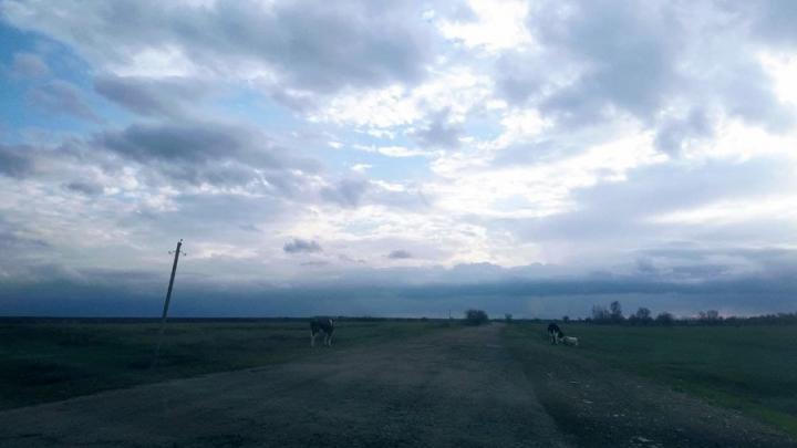 Усиление ветра ожидается в Саратовской области
