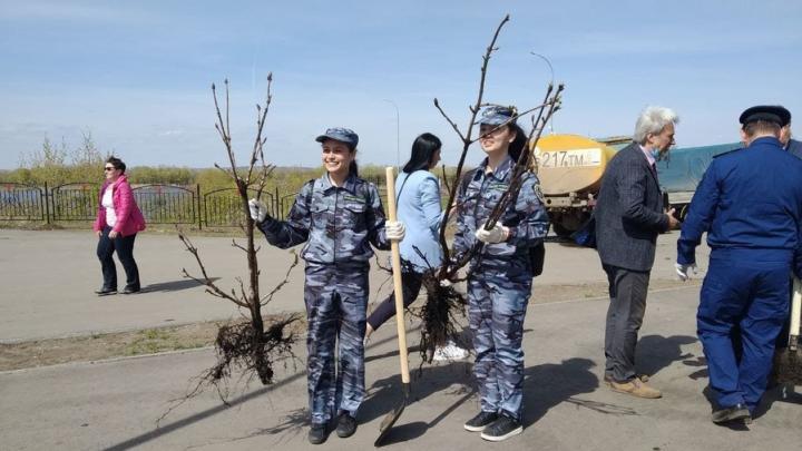 Более 200 деревьев высажено в «Саду памяти» в Энгельсе