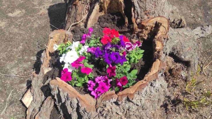 Цветы в сквере имени Михаила Гадеева вернули после жалоб на «быдло»