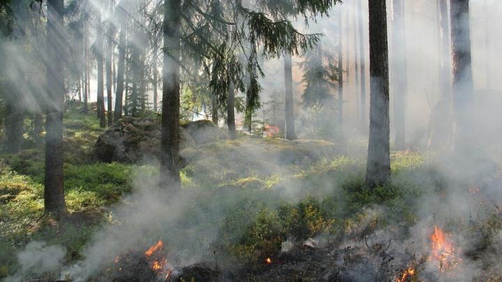 Пять лесных пожаров произошло за неделю в Саратовской области