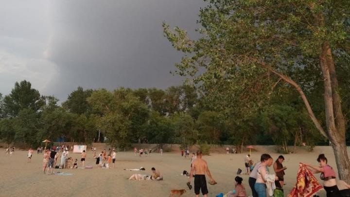 У городского пляжа в Энгельсе спилят тополя