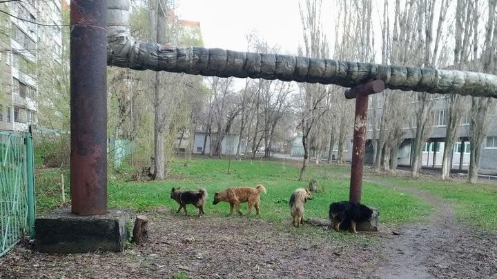 На отлов собак в Аткарске выделено 300 тысяч рублей