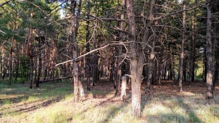 Саратовцам на три недели запретили ходить в лес