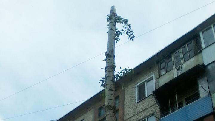 Чиновники Заводского района заверили, что обрезка полезна для деревьев