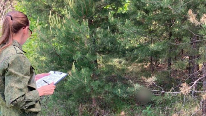 Грибник нашел череп человека в Татищевском районе