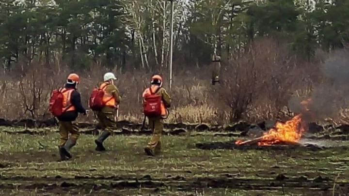 Сотрудники Заволжского лесхоза и МЧС спасли от пожара детский лагерь в Балаковском районе