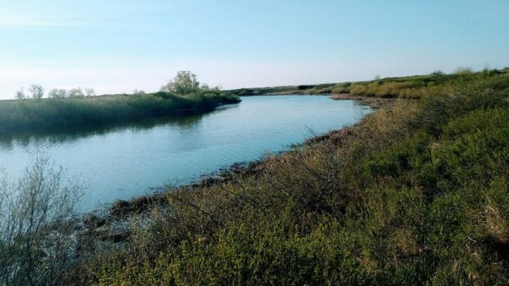 Семилетний мальчик утонул в Перелюбском районе