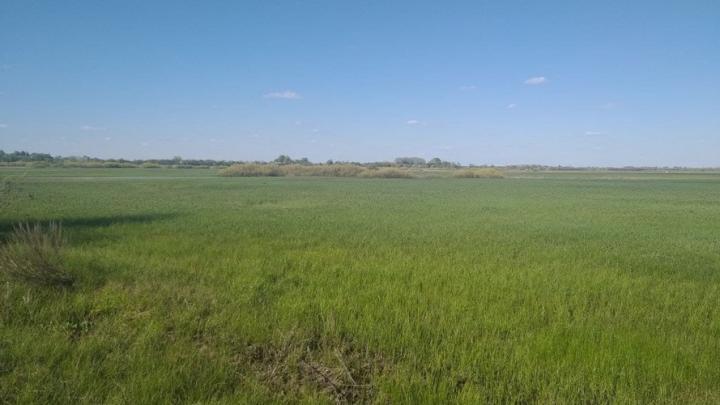 Предприятие из Самары испортило земли в Лысогорском районе Саратовской области