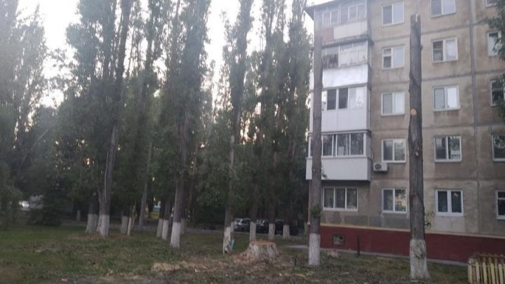 В Заводском районе Саратова снова пилят деревья