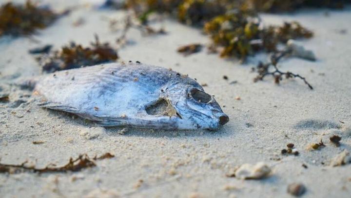 Мертвая рыба найдена в пруду в Хвалынском районе