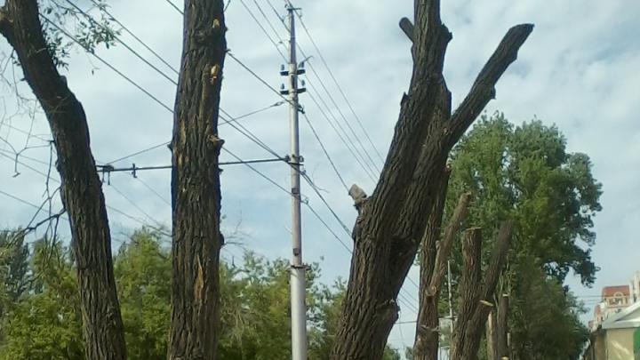 Администрация Заводского района нашла виновников варварской обрезки деревьев
