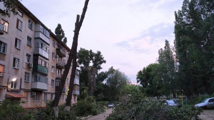 Безжалостная опиловка деревьев в Заводском районе продолжается