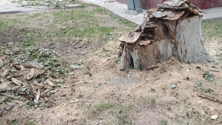 Аркадакский лесхоз обязали убрать за собой древесину