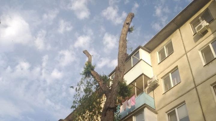 Прокуратура: вырубка деревьев в Саратове происходит из-за бездействия властей