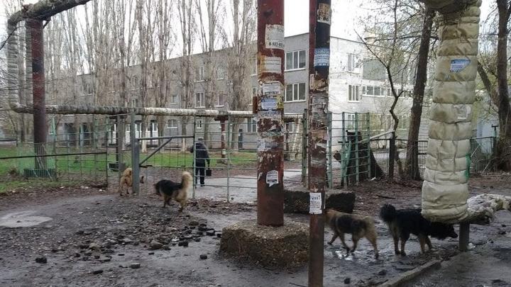 В Алгае отловят бездомных собак