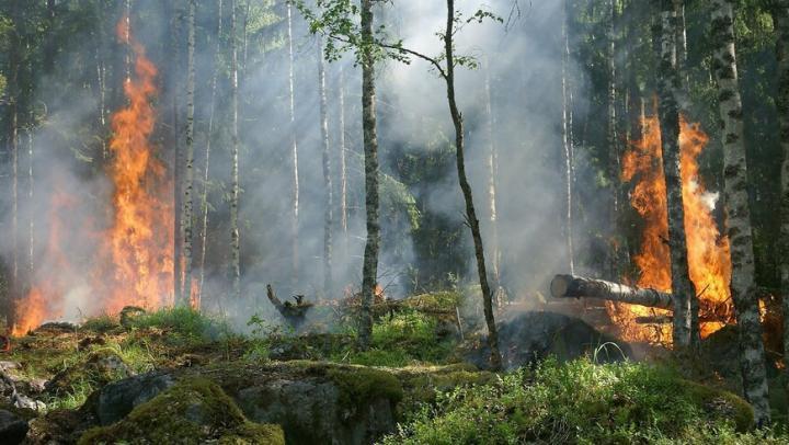 В Балашовском районе сгорело больше гектара леса