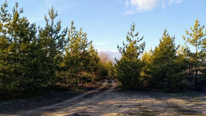 Саратовцам снова запретили ходить в лес