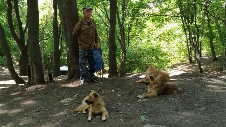 Мэрия Саратова планирует отловить 88 собак до конца сентября