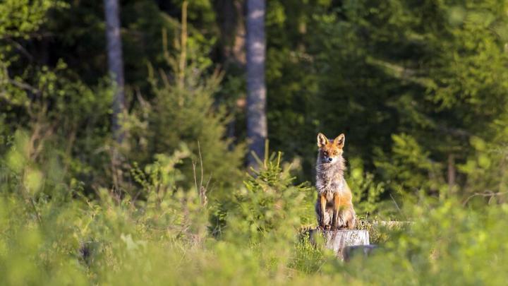 В Саратовской области вводится запрет охоты на некоторых участках