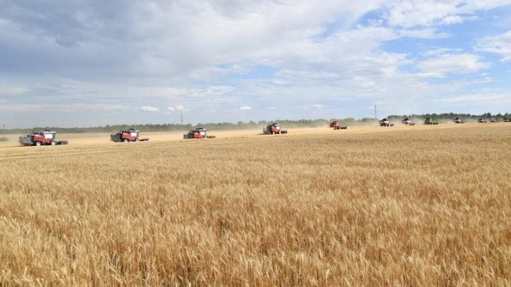 Саратовская область в лидерах Приволжья по сбору зерна