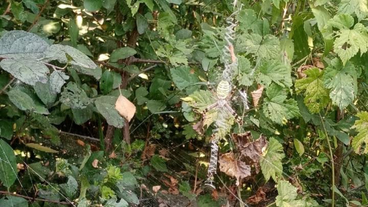 Появление больших пауков взбудоражило саратовцев