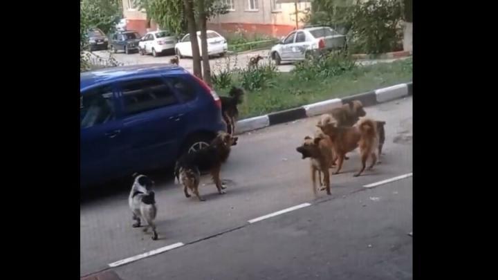 Агрессивные собаки пугают жителей Заводского района | ВИДЕО