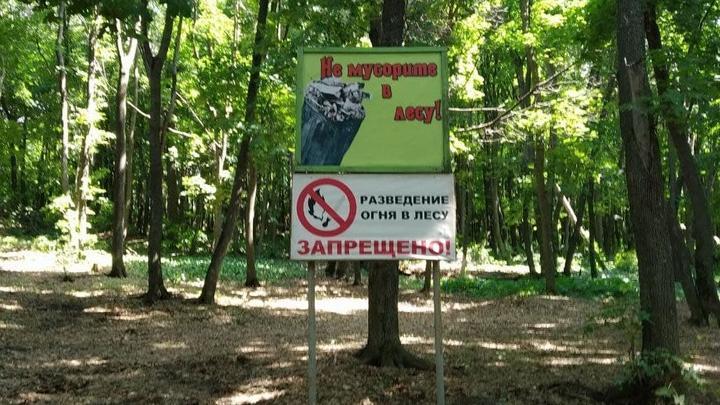 В Саратовской области произошло 29 лесных пожаров