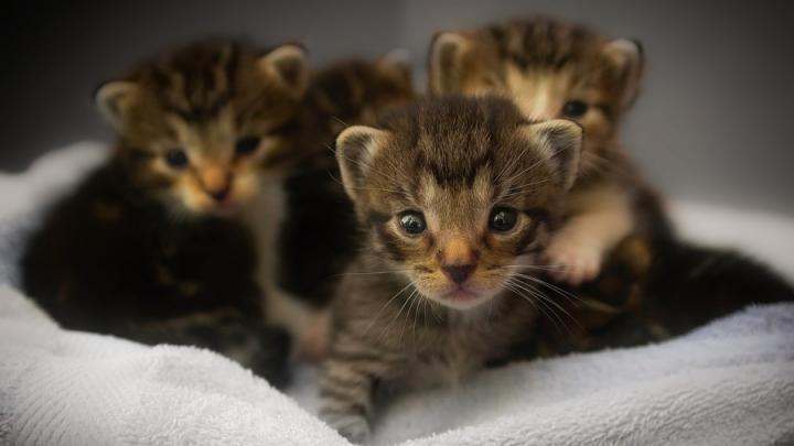 Саратовец пытался продать котиков и лишился последних трех тысяч рублей