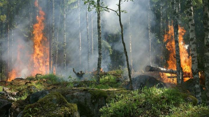 Неизвестные подожгли семь гектаров леса в Вольском лесничестве