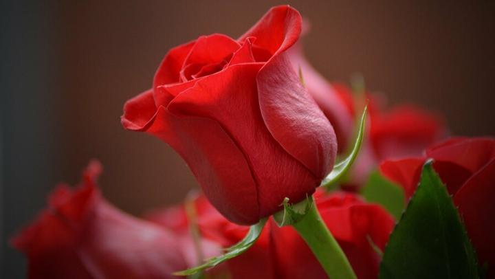 Правительство Радаева заказало цветы за полмиллиона рублей