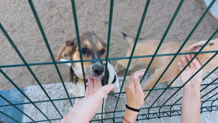 Новый приют для собак и кошек открылся в Саратове