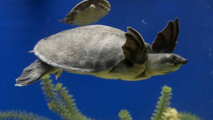 Все в  гости к черепахе! В Саратове состоялось открытие выставки «Подводный мир»