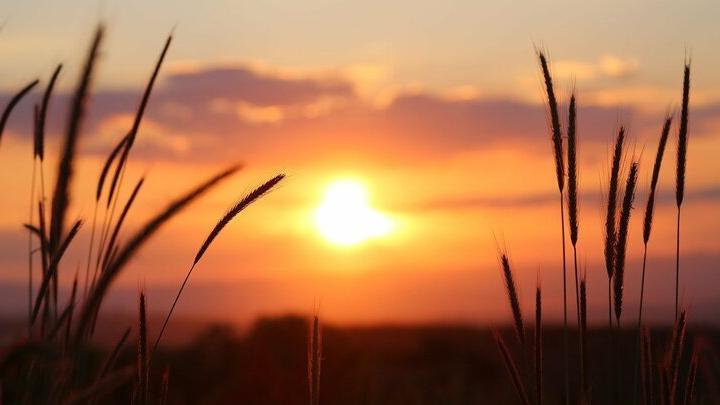Грозы и жара в Саратовской области