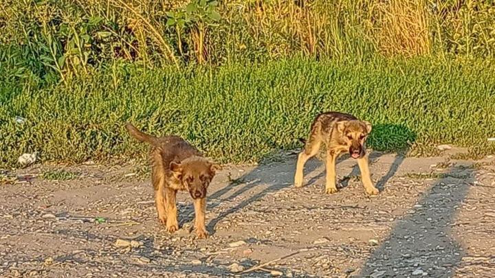 Более 4,5 тысяч собак отловят в Саратовской области за три года