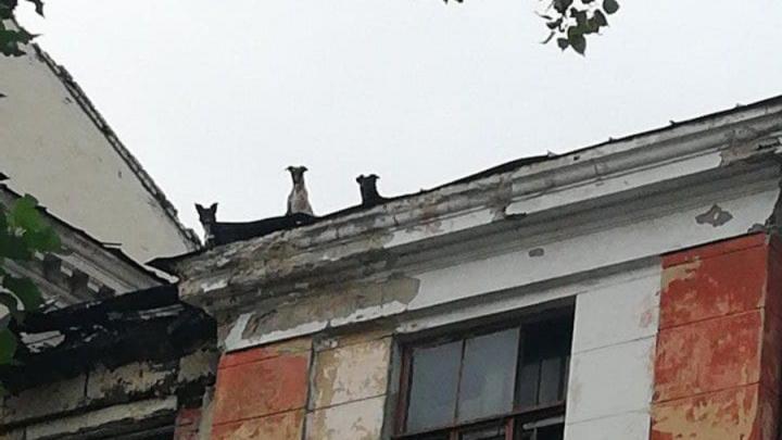Собаки поселились на крыше бывшего общежития издательства «Слово»