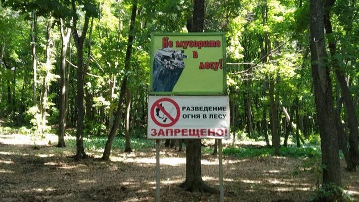 Саратовцам продлили ограничение на пребывание в лесах