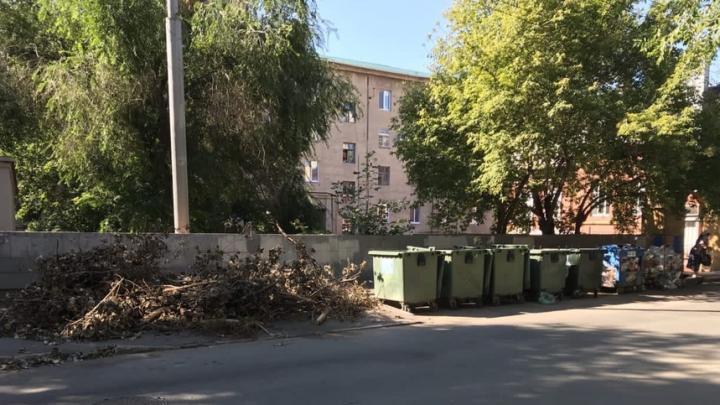 Регоператор напоминает управляющим организациям об ответственности за сброс опиленных деревьев на площадки ТКО
