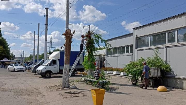 Администрация объяснила, кому мешали два дерева в Заводском районе
