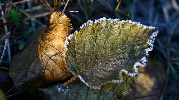 В Саратовской области прогнозируют заморозки