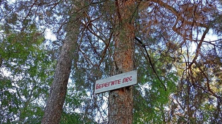 Участие региона в нацпроекте «Экология» способствует снижению лесных пожаров